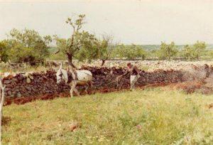 0a-bibiloni-miquel-sogre-antonia-llaurant-a-cas-misser-vi-1972